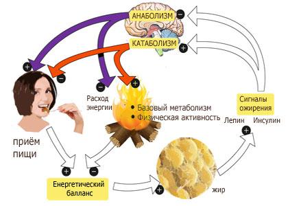 метод семенова для похудения отзывы